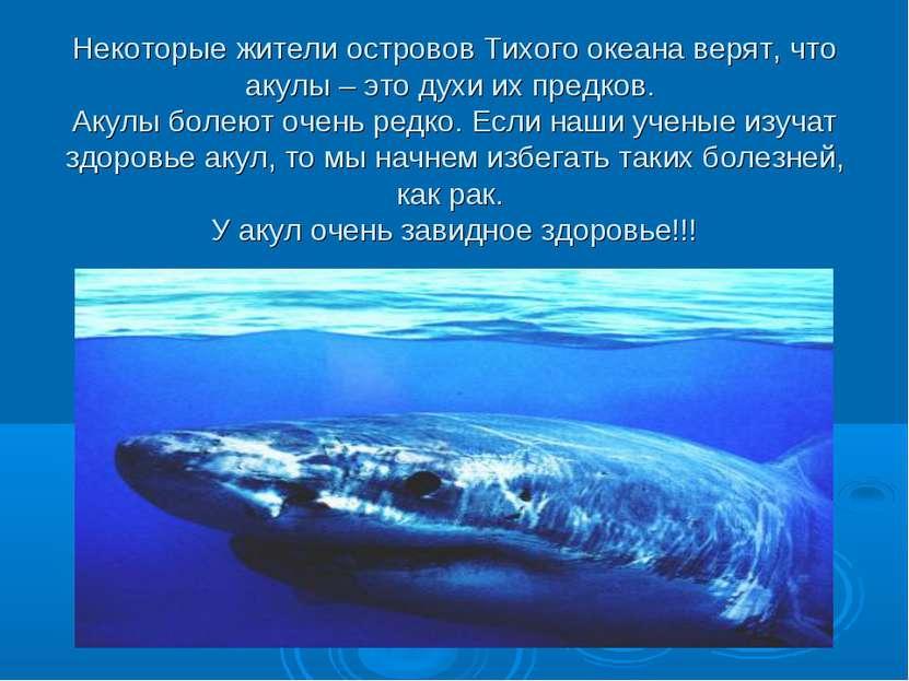Некоторые жители островов Тихого океана верят, что акулы – это духи их предко...