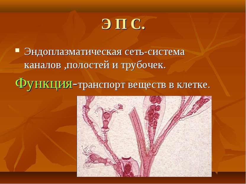 Э П С. Эндоплазматическая сеть-система каналов ,полостей и трубочек. Функция-...