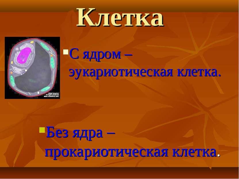 Клетка С ядром – эукариотическая клетка. Без ядра – прокариотическая клетка.