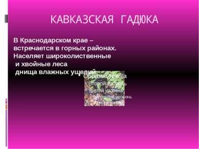 КАВКАЗСКАЯ ГАДЮКА В Краснодарском крае – встречается в горных районах. Населя...