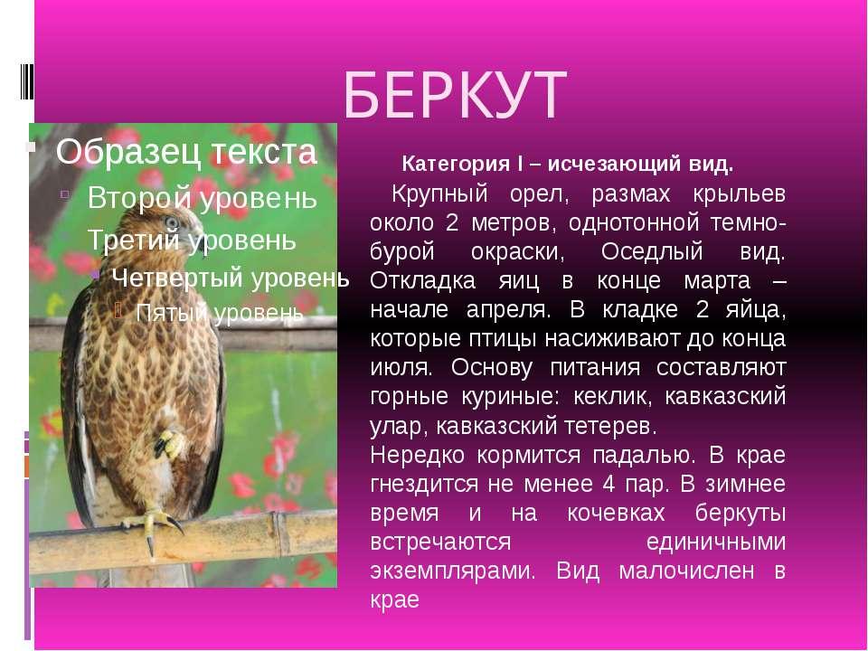 БЕРКУТ Крупный орел, размах крыльев около 2 метров, однотонной темно-бурой ок...