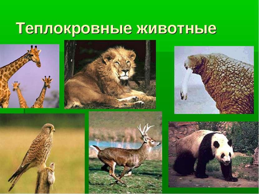 Теплокровные животные
