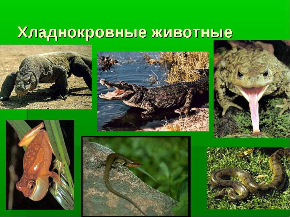Хладнокровные животные