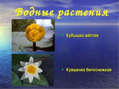 Водные растения Кубышка жёлтая Кувшинка белоснежная
