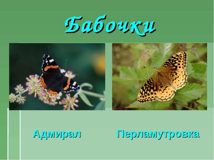 Бабочки Адмирал Перламутровка