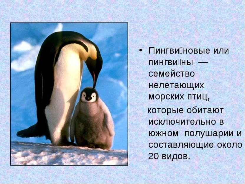 Пингви новые или пингви ны — семейство нелетающих морских птиц, которые обит...
