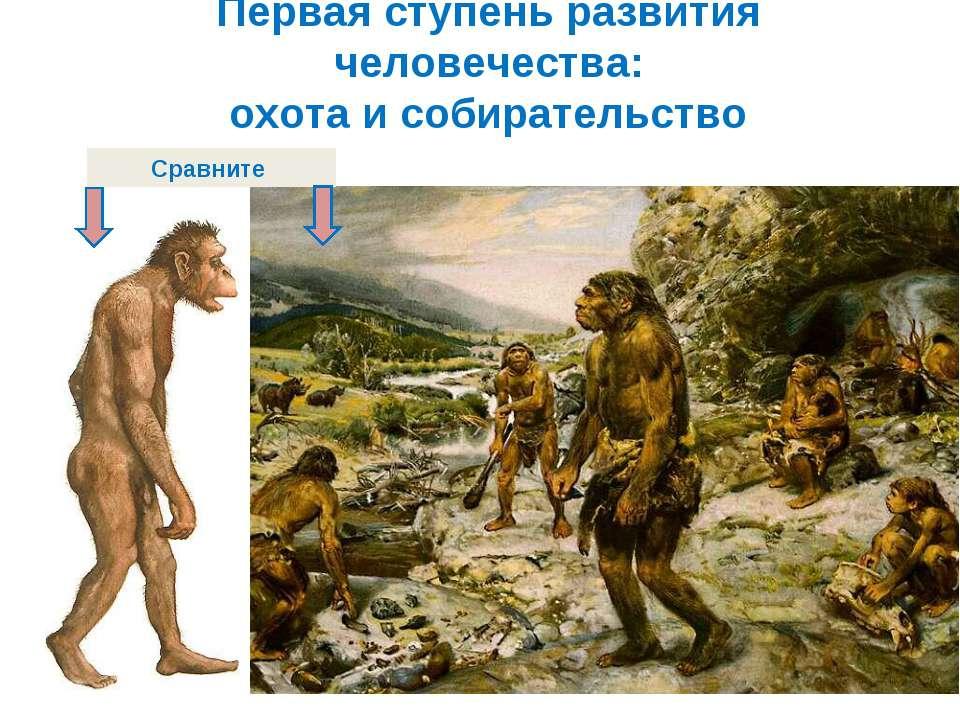 Первая ступень развития человечества: охота и собирательство Сравните