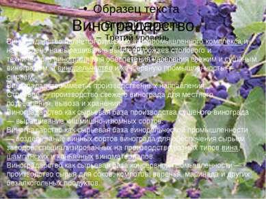 Виноградарство Виноградарство является отраслью агропромышленного комплекса и...