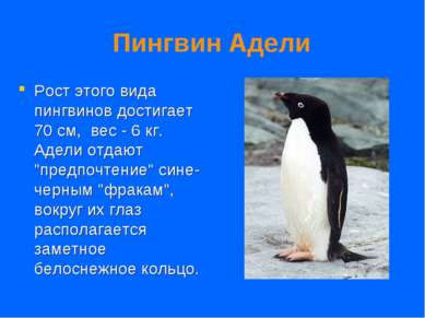 Пингвин Адели Рост этого вида пингвинов достигает 70 см, вес - 6 кг. Адели о...