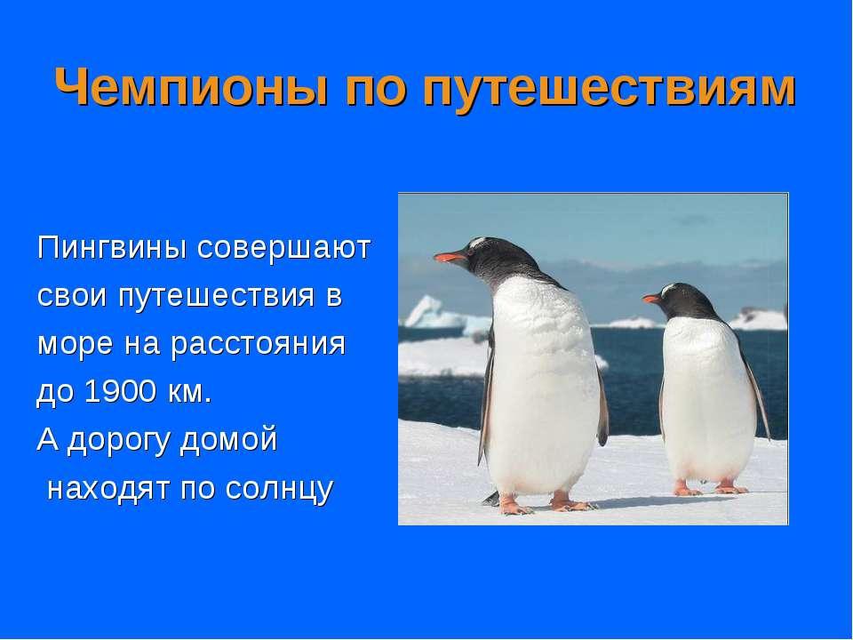 Чемпионы по путешествиям Пингвины совершают свои путешествия в море на рассто...