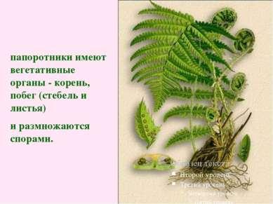 папоротники имеют вегетативные органы - корень, побег (стебель и листья) и ра...