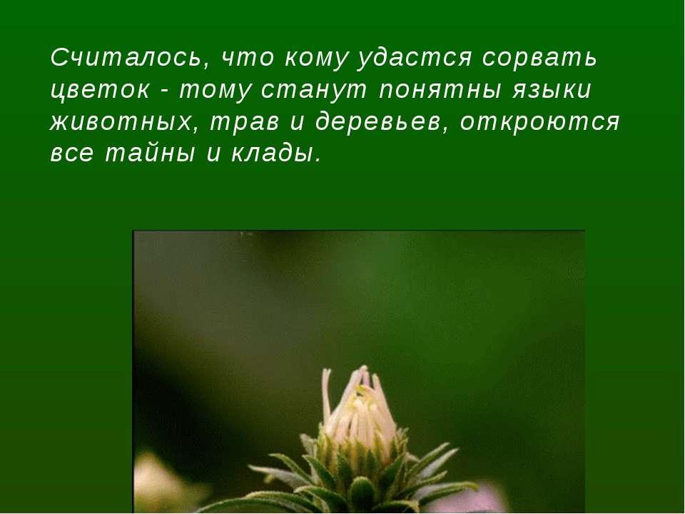 Считалось, что кому удастся сорвать цветок - тому станут понятны языки животн...