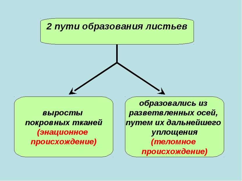 2 пути образования листьев выросты покровных тканей (энационное происхождение...