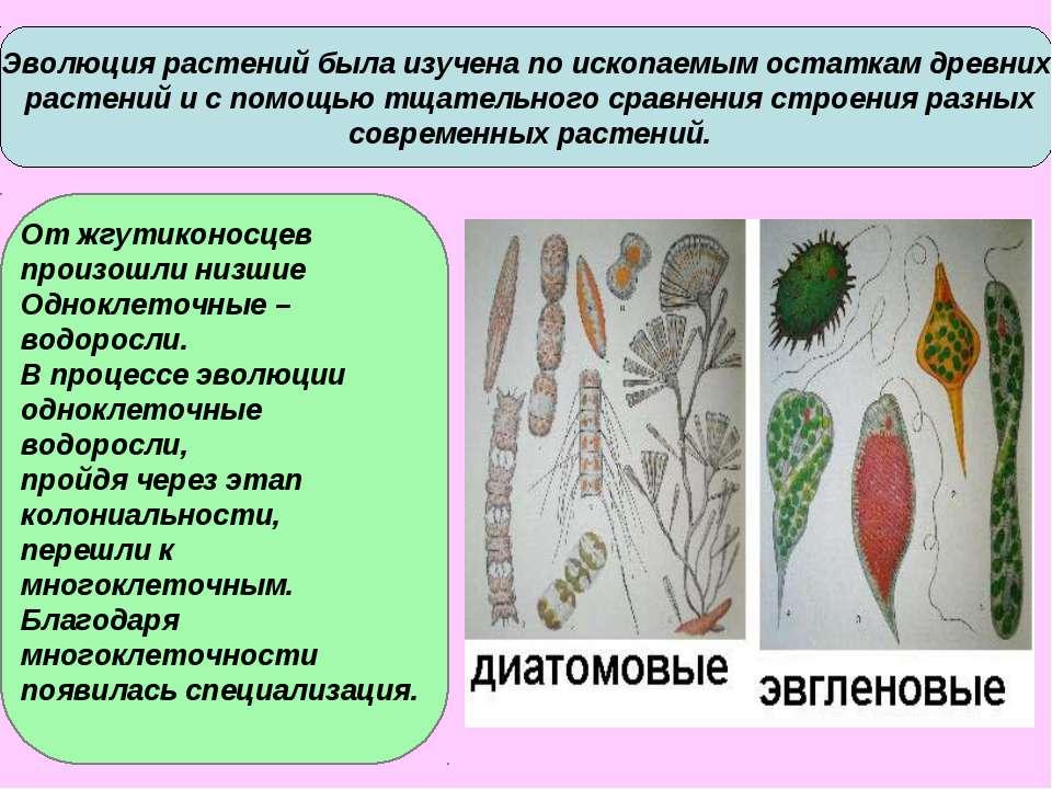 Эволюция растений была изучена по ископаемым остаткам древних растений и с по...