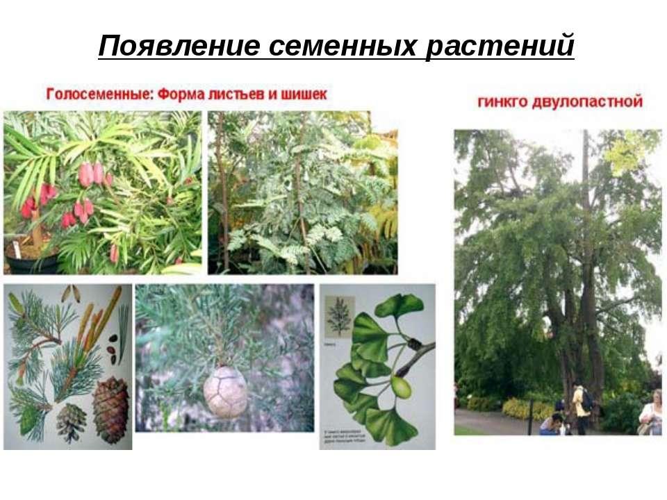 Появление семенных растений