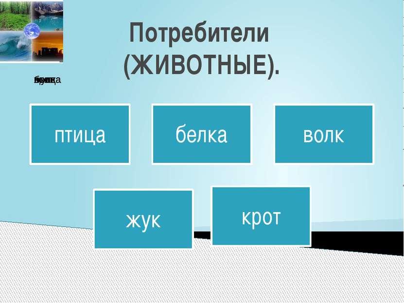 Потребители (ЖИВОТНЫЕ).