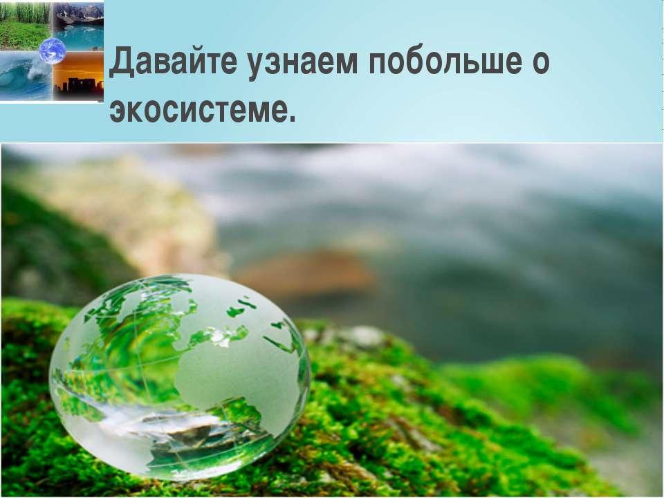 Давайте узнаем побольше о экосистеме.