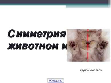 Симметрия в животном мире 900igr.net группа «зоологи»