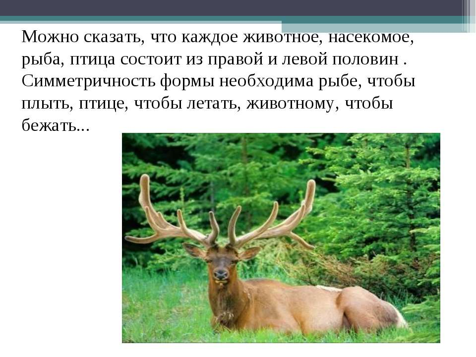 Можно сказать, что каждое животное, насекомое, рыба, птица состоит из правой ...