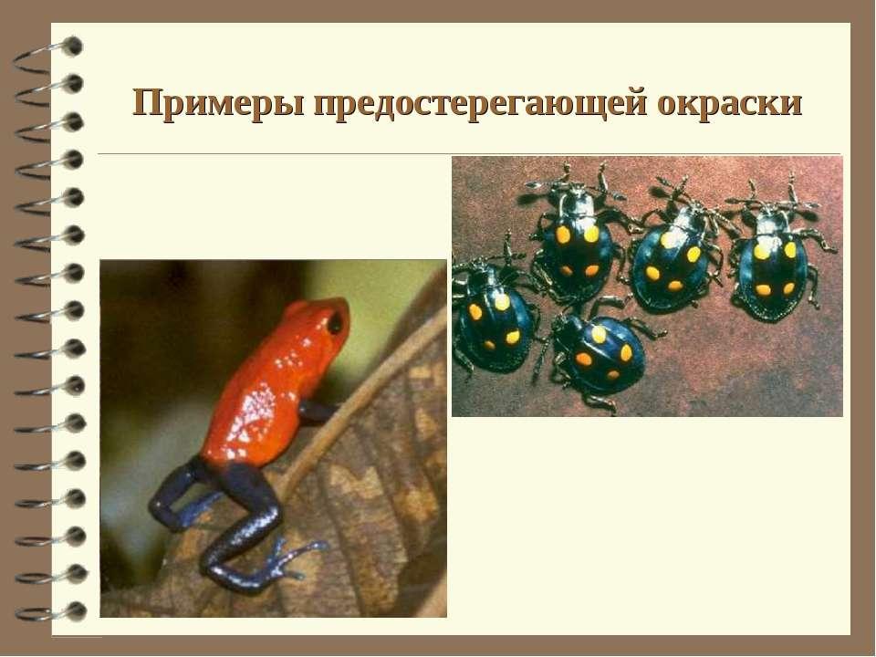Примеры предостерегающей окраски
