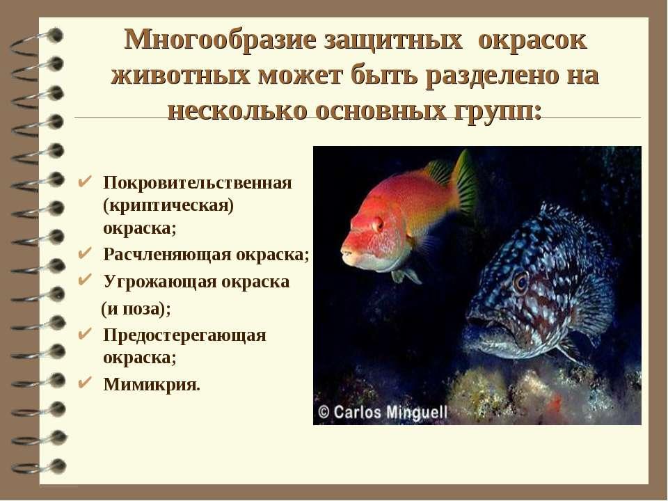 Многообразие защитных окрасок животных может быть разделено на несколько осно...
