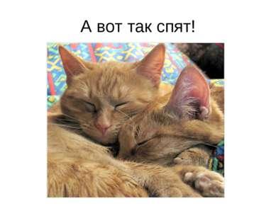 А вот так спят!