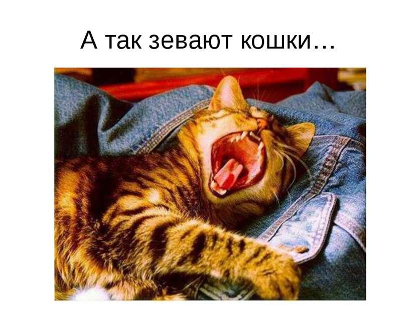 А так зевают кошки…