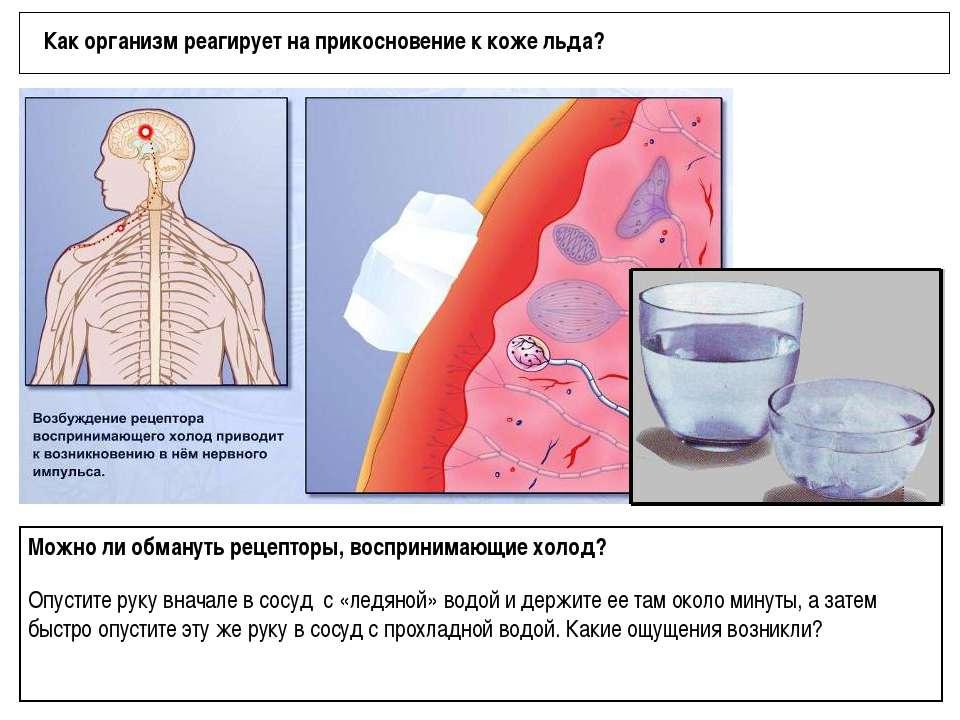 Как организм реагирует на прикосновение к коже льда? Можно ли обмануть рецепт...