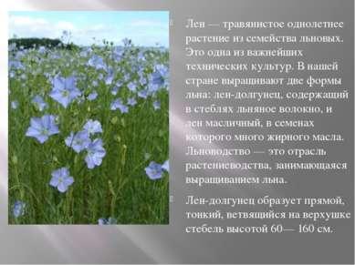 Лен — травянистое однолетнее растение из семейства льновых. Это одна из важне...