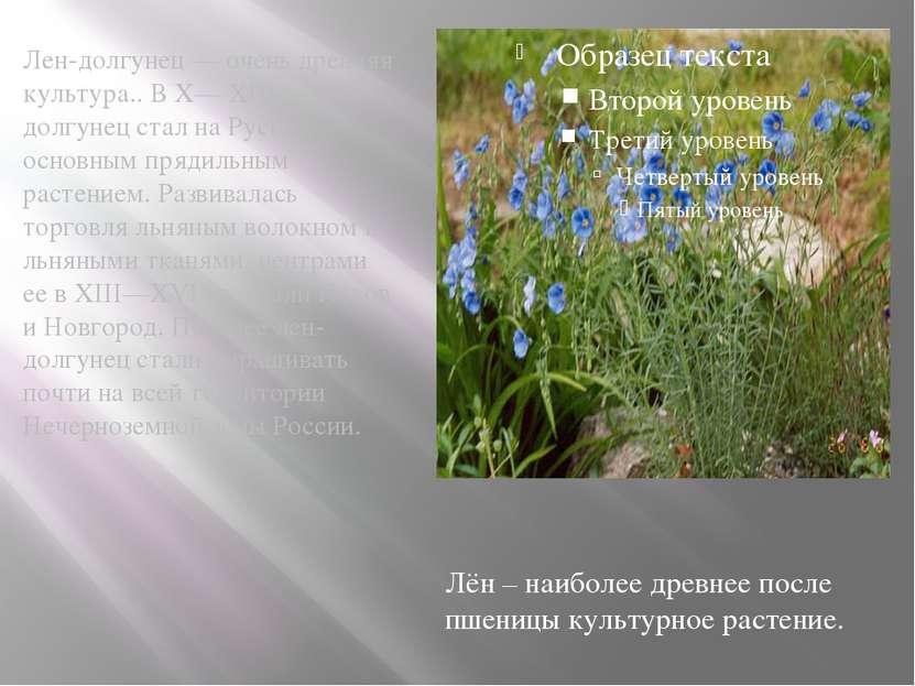 Лен-долгунец — очень древняя культура.. В X— XIII вв. лен-долгунец стал на Ру...