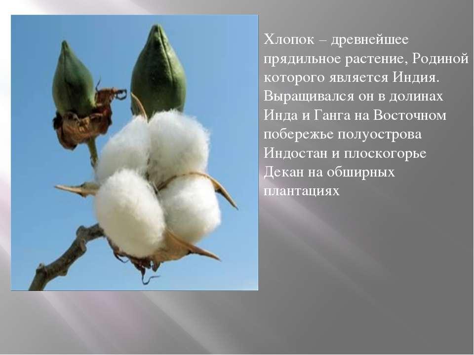 Хлопок – древнейшее прядильное растение, Родиной которого является Индия. Выр...