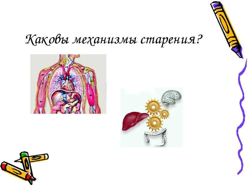 Каковы механизмы старения?