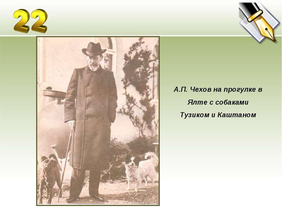 А.П. Чехов на прогулке в Ялте с собаками Тузиком и Каштаном
