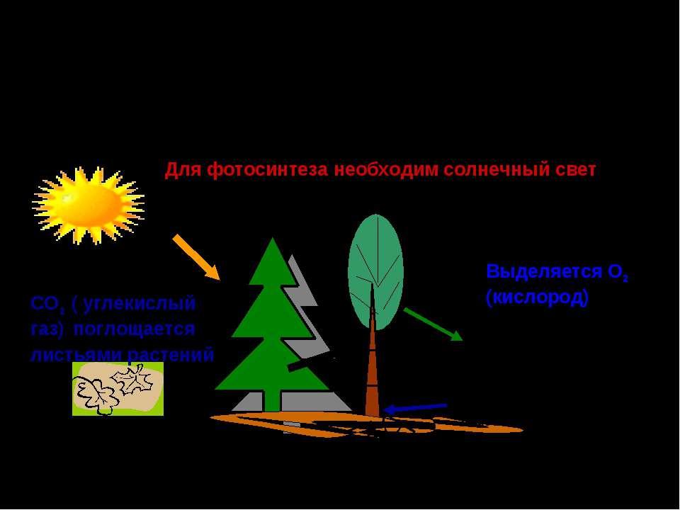Роль зелёных растений в поддержании постоянного газового состава атмосферы и ...