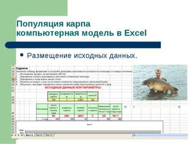 Популяция карпа компьютерная модель в Excel Размещение исходных данных.