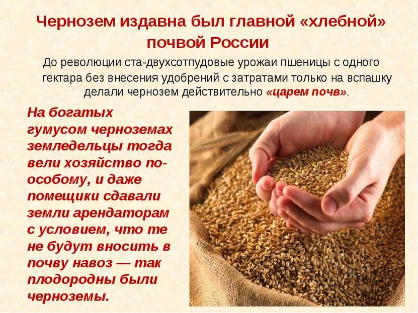 Чернозем издавна был главной «хлебной» почвой России До революции ста-двухсот...
