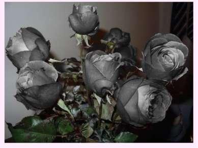 Черные розы - бесповоротный разрыв отношений.