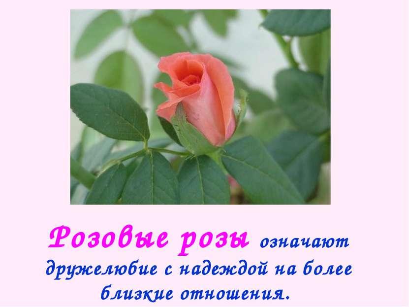 Розовые розы означают дружелюбие с надеждой на более близкие отношения.