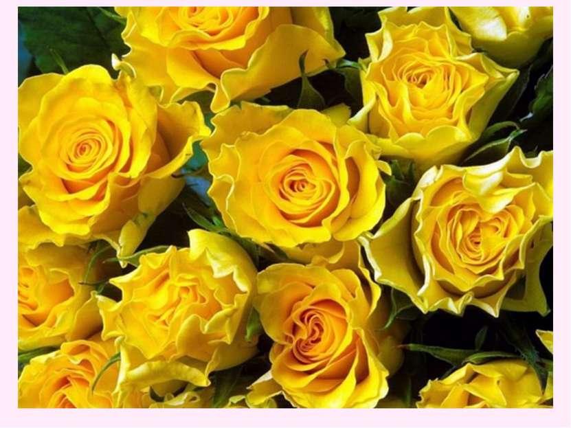 Желтые розы указывают на дружеское расположение и не более того.