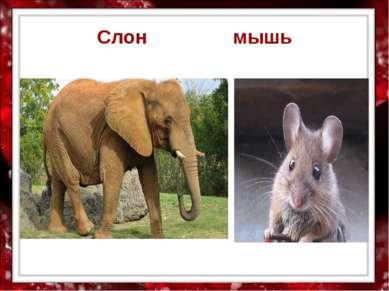 Слон мышь