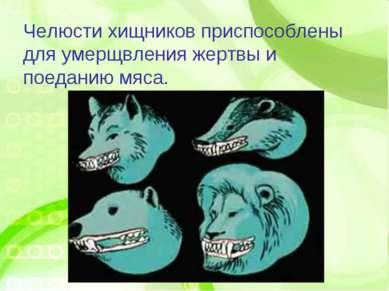 Челюсти хищников приспособлены для умерщвления жертвы и поеданию мяса.
