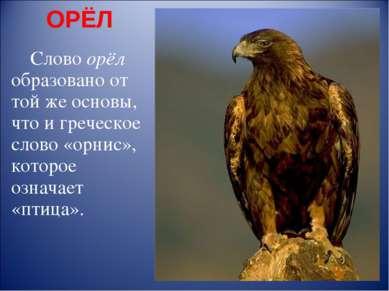 ОРЁЛ Слово орёл образовано от той же основы, что и греческое слово «орнис», к...