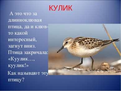 КУЛИК А это что за длинноклювая птица, да и клюв-то какой интересный, загнут ...