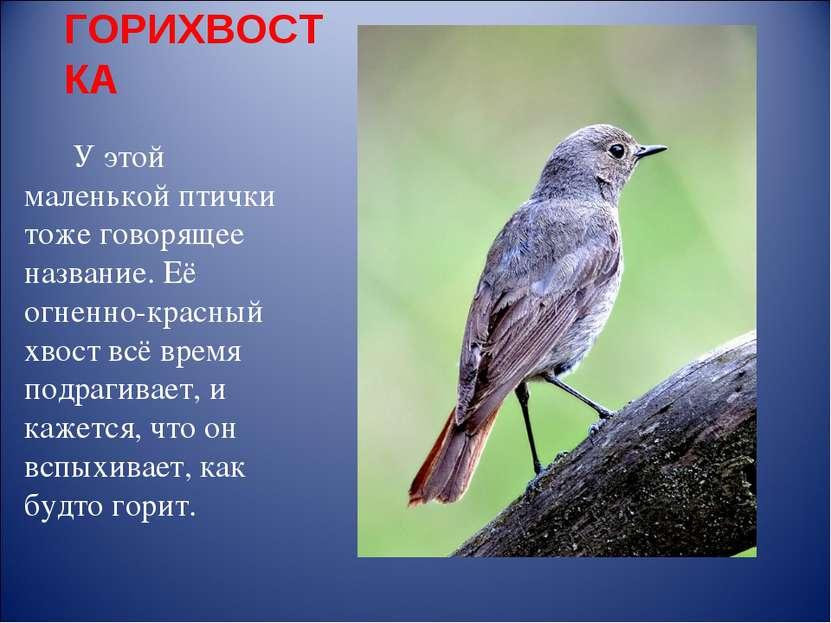 ГОРИХВОСТКА У этой маленькой птички тоже говорящее название. Её огненно-красн...