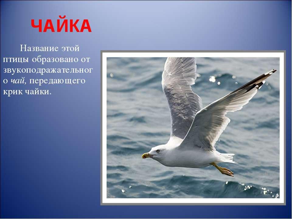 ЧАЙКА Название этой птицы образовано от звукоподражательного чай, передающего...