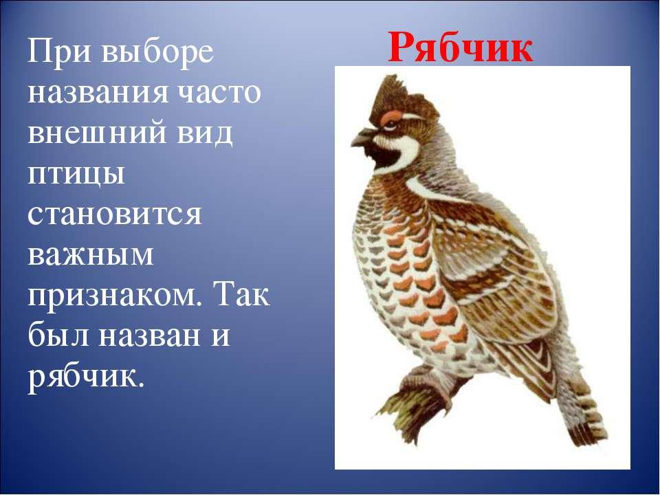 При выборе названия часто внешний вид птицы становится важным признаком. Так ...