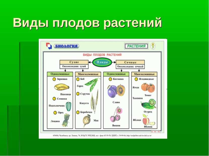 Виды плодов растений