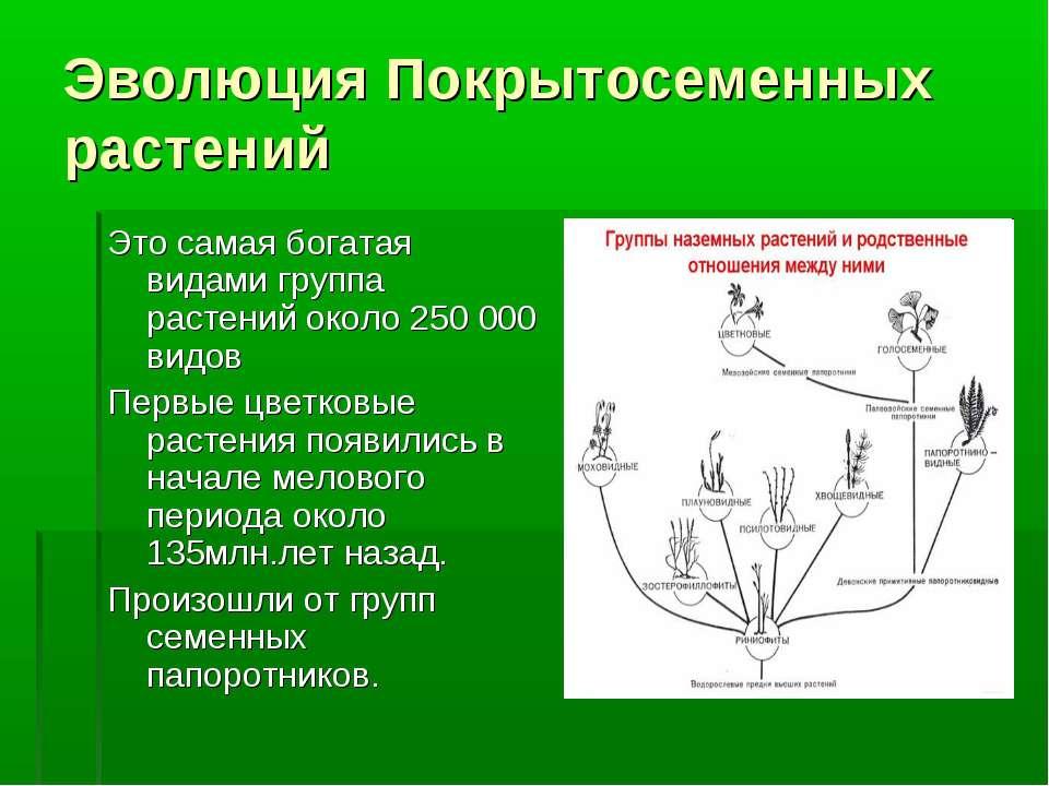 Эволюция Покрытосеменных растений Это самая богатая видами группа растений ок...