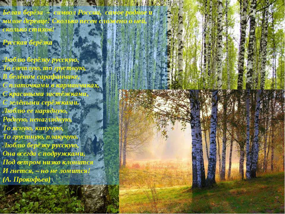 Белая берёза – символ России, самое родное и милое деревце! Сколько песен сло...