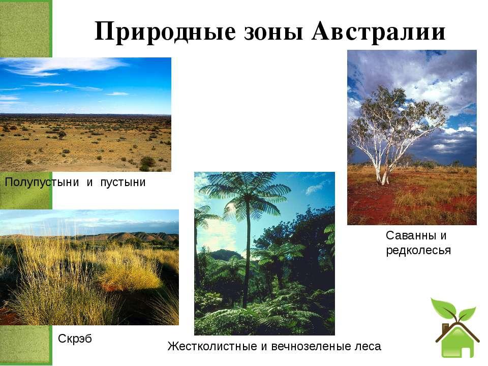 Природные зоны Австралии Скрэб Саванны и редколесья Жестколистные и вечнозеле...